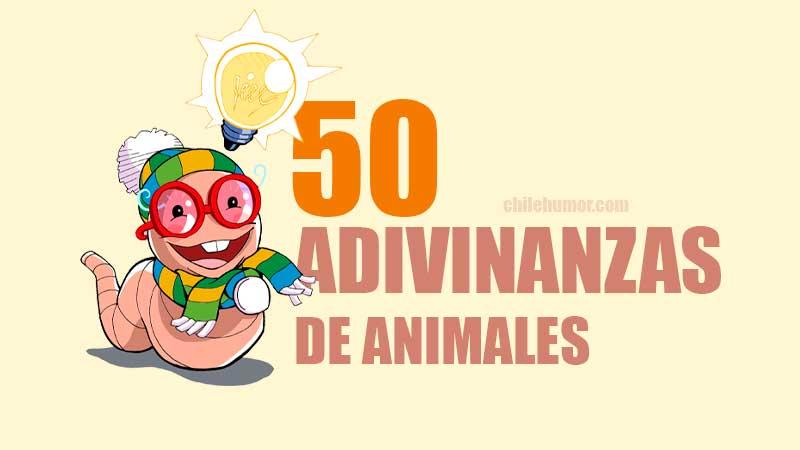 50 adivinanzas de animales con respuestas