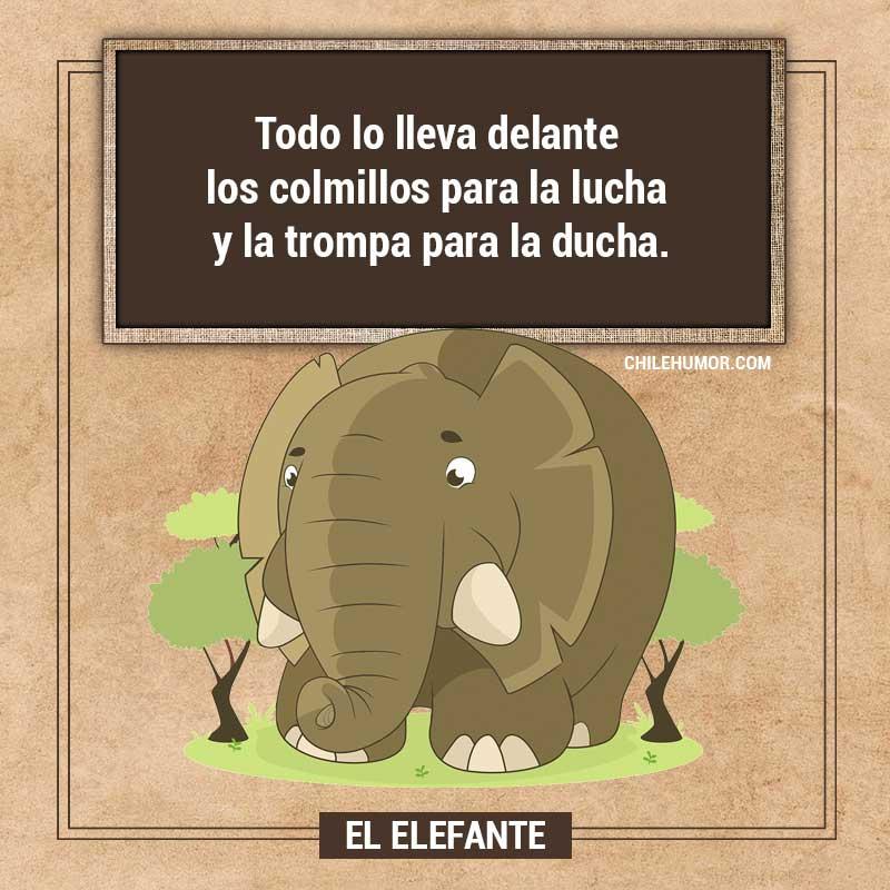 Adivinanzas para niños: El Elefante