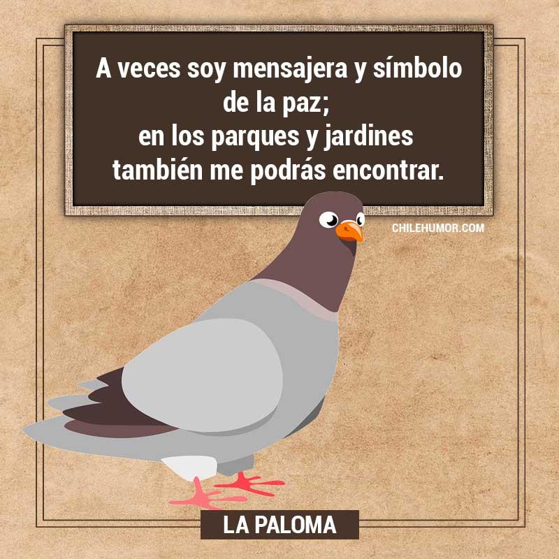 Adivinanzas para niños: La paloma